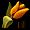 Grządka żółtych tulipanów